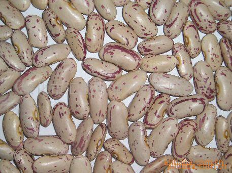 供应奶化芸豆,有机选,手选奶花芸豆