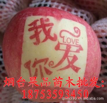 供应烟台苹果【艺术贴字苹果 烟台水晶红富士苹果批发一二级果】