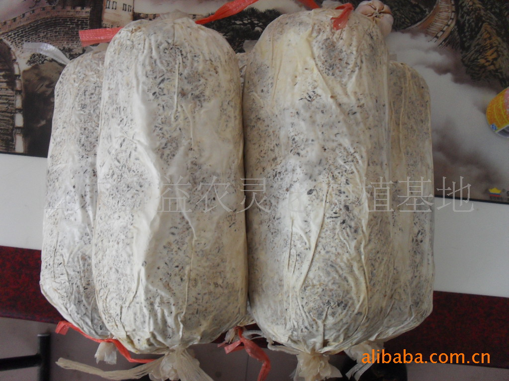 供应优质南韩赤灵芝栽培种,灵芝菌棒