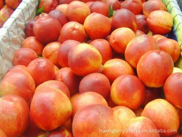 台湾甜油桃苗 果品质优 极丰产 果树苗