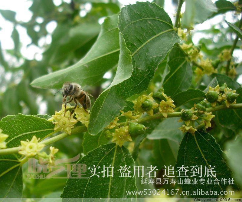 批发供应,小代椴树蜂蜜