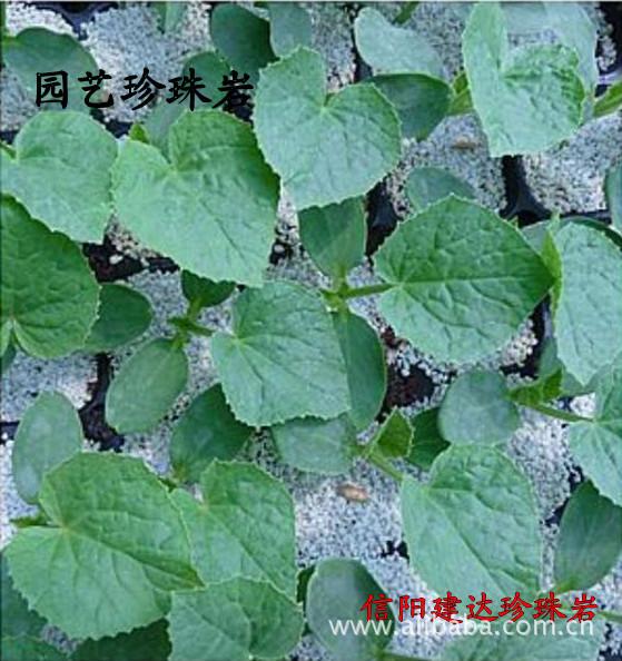 大颗粒珍珠岩 供应育苗基质用 大颗粒 珍珠岩 阿里巴巴
