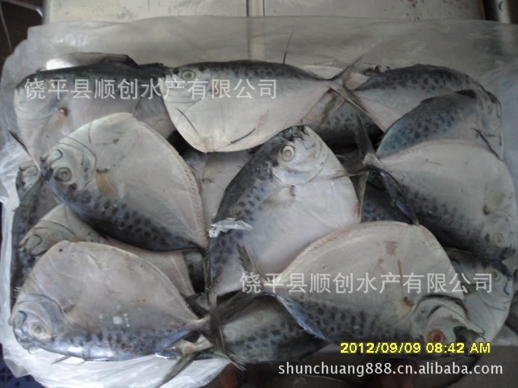 供应150克/条 刀鲳鱼 皮刀鱼 鲳鱼 猪哥鲳 顺创水产有限公司