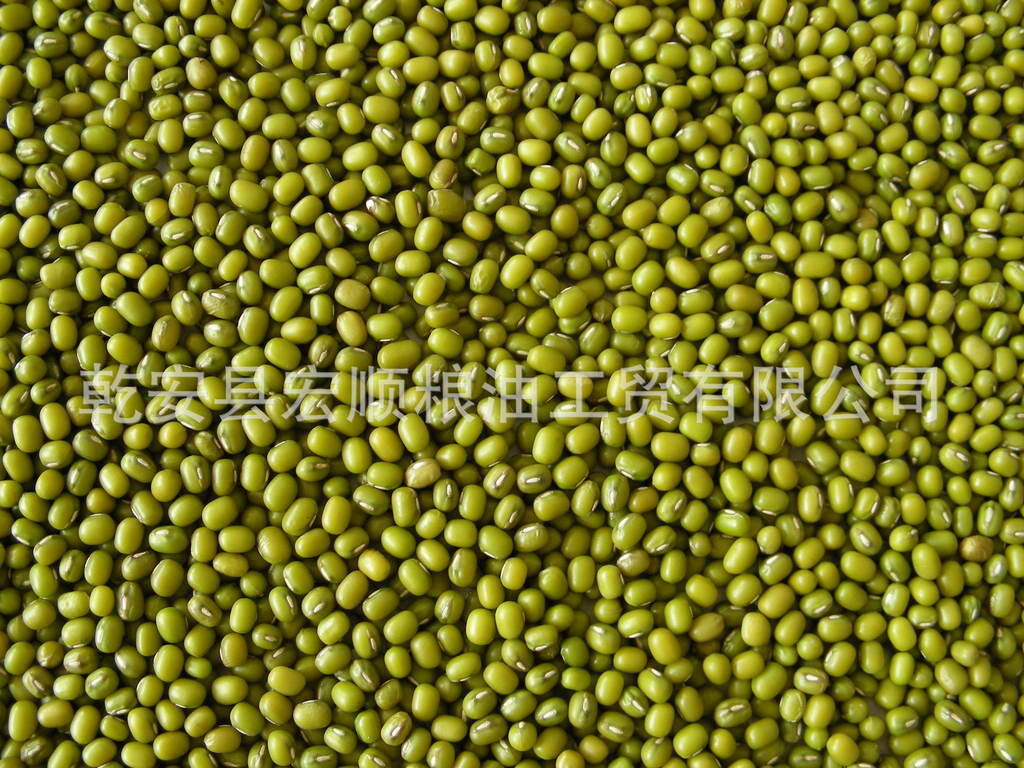 产地直销 东北绿豆 ,经过:比重,抛光,磁选, 绿豆