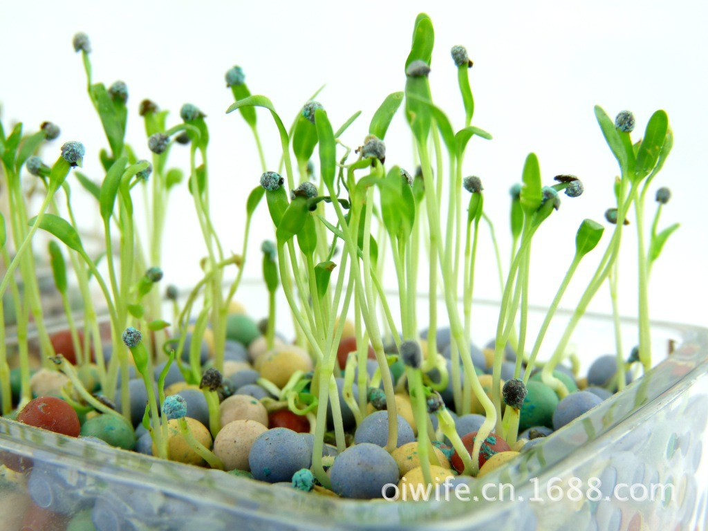 性格色彩栽培 个性盆栽 植物盆栽 迷你桌面园艺 室内植物
